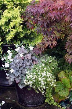 Embracing the Change of Seasons | Fine Gardening #GardenLandscapingTrees