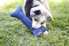DIY Dog Toys | The Happy Hunters - buy squeakers at ebay and stuff in along with the stuffing