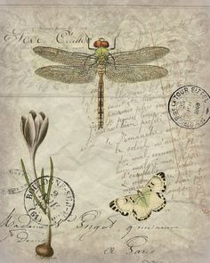 Botanical Dragonfly Print, Pillow, Note Cards is part of Dragonfly prints - Original artwork created from vintage bookplates, etchings & papers Printed in the USA on handcrafted paper Vintage Ephemera, Vintage Cards, Vintage Paper, Collages D'images, Paper Art, Paper Crafts, Foam Crafts, Paper Toys, Etiquette Vintage