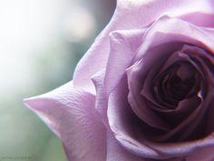 Secret Garden  by Betina Juchem Clemens , via 500px