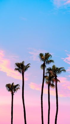 Matt Crump photography pastel iPhone wallpaper palm trees Source by xxhollycatxx Pastel Color Wallpaper, Pastel Iphone Wallpaper, Ocean Wallpaper, Summer Wallpaper, Colorful Wallpaper, Wallpaper Tumblr Lockscreen, Wallpaper Backgrounds, Tree Moon Wallpaper, Palmiers