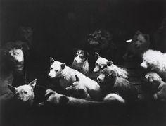 Jun Miki. Dogs. c. 1950