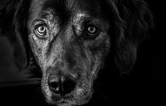 Dogs, Animals, Pictures, Animaux, Doggies, Animales, Animal, Pet Dogs, Dieren
