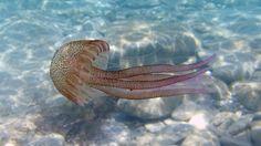 Η Μεσόγειος μετατρέπεται σε θάλασσα με μικρόβια και μέδουσες.