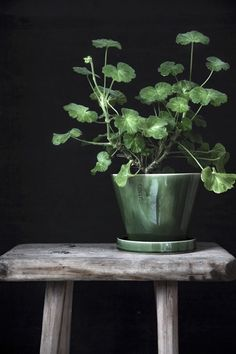 Indoor Vertical Gardening Tips and Ideas Organic gardening isn't always about food to eat. Some people enjoy growing flowers and other forms of plant life as well. Green Plants, Potted Plants, Indoor Plants, Decoration Plante, Pot Plante, Ikebana, Plant Decor, Indoor Garden, Houseplants