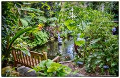1000 images about pond ideas on pinterest small garden for Koi zone pond aquatics