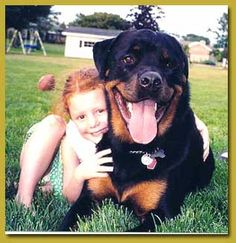 Rottweiler I miss my boy so much it makes my eyes tear!!! Idk why he had to be taken from me :(