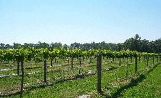 A Secret Garden Winery - muscadine 1018 Airport Rd, Pikeville, NC 27863 919-734-0260