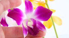 Mit dieser Pflege leben Orchideen länger #plants