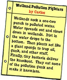 Wetland Pollution Fighters: by Carlos