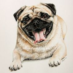 Ralph the Pug demonstrates beautifully why I recommend getting down to your pet's level to get a great shot – at his eye level you really get the most of his lovely character. Coloured pencil dog portrait on Bristol board Dog Illustration, Illustrations, Pug Quotes, Dog Tumblr, Pug Art, Pet Dogs, Pets, Dog Paintings, Pug Love