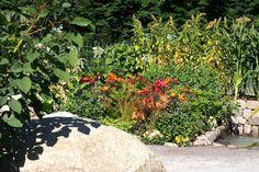 Medium Ground Inca Plants around the Orchids Journey Latin America's Inca Garden was designed by Jennifer Jones for the RHS Hampton Court Palace Flower Show This World Garden was built by Surrey Hills Landscaping and… Rhs Hampton Court, Jennifer Jones, Colorful Garden, Flower Show, Edible Garden, Latin America, Growing Vegetables, Surrey, Vegetable Garden