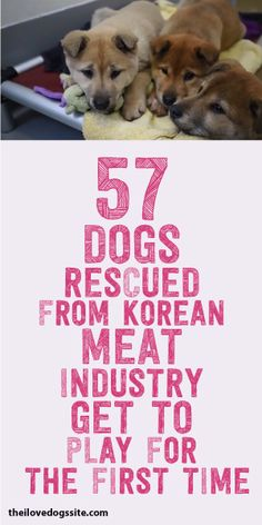 57 Dogs Rescued From Korean Meat Industry Get To Play For The First Time!