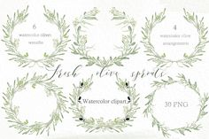 Olive sprouts wreath branch clipart by LABFcreations on @creativemarket