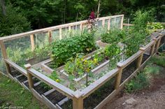 Beautiful garden with fully enclosed berry enclosure located in Ridgefield, CT.
