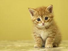 niedlichen Baby Kätzchen, Katze, kleine, Klauen, liebenswert