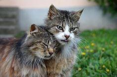 (≡-·̫-≡)(≡•̀ꈊ•́≡)   #neko #cat