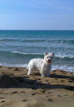 Aggie at sandy Corfu Glyfada beach