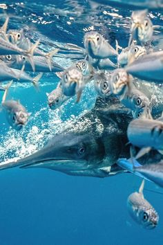 The photographers featured in the annual Underwater Photographer of the Year competition manage to illuminate the dark depths, uncovering just a skerrick of the creatures that dwell beneath the surface. Check out the 20 Photograph winners...