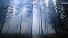 smoke forest - Google Search