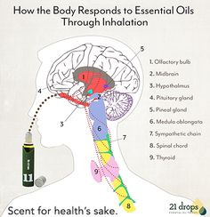 Essential oils can help alter our physical, mental and emotional well-being by triggering and strengthening our bodies' own natural processes. They are made up of tiny molecules that can deliver healing properties to the systems that control our physiological state. Thanks @21drops for coming up this info. Love lots --- @anitacreyes