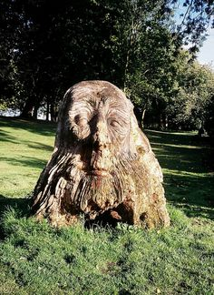 Tree Stump Face by SomeDriftwood, via Flickr