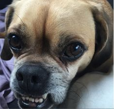 Awwww: The Cutest Author Pets on Instagram, Part 1