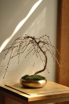 Houseplants for Better Sleep Bonsai By Sinajina, Japan