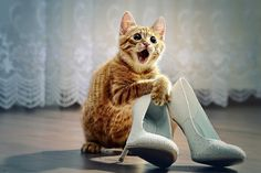 Shoes are a girl's best friend, no matter the species ;)