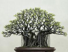 Black Bonsai