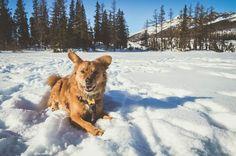 Csorba tó, Magas-Tátra, Szlovákia // Strbske pleso, Slovakia Hiking Dogs, Corgi, Marvel, Snow, Animals, Outdoor, Outdoors, Corgis, Animales