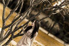 www.facebook.com/lalitvohraphotography  www.lalitvohra.com