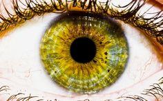Yellow. Close-up.