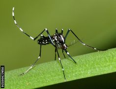 Controlling Adult Mosquitoes