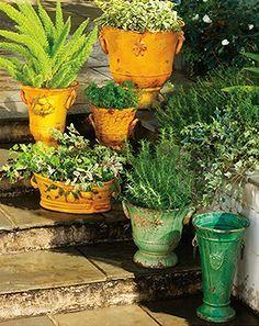 bright and bold garden, gardening