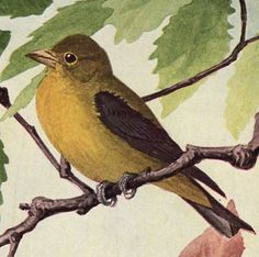 Free Vintage Clip Art - Yellow Bird - The Graphics Fairy