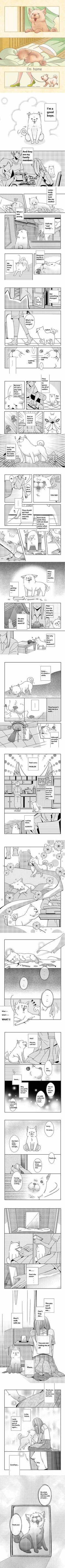 Life of a doggo