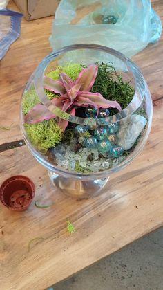 Earth Star with marbles and beach glass Terrarium Workshop, Interior Garden, Marbles, Miniatures, Earth, Star, Glass, Home Decor, Inside Garden