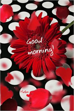 With Tenor, maker of GIF Keyboard, add popular Good Morning animated GIFs to your conversations. Morning Morning, Good Morning Gif, Good Morning World, Good Morning Picture, Morning Pictures, Morning Coffee, Good Morning God Quotes, Good Morning Dear Friend, Good Morning Roses