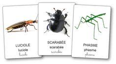 Imagier des petites bêtes du jardin et insectes Diy Nature, Science Crafts, Petite Section, Montessori Activities, Bee, Animals, Cycle 1, Culture, School