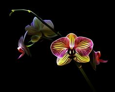 Photograph Orchidee by Antonio Amati on 500px