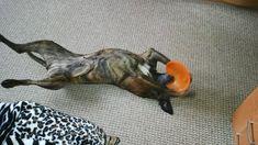 Moje oblíbené frisbee