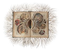 Sprawling Paper Nervous Systems Cut into Repurposed Books by Barbara Wildenboer  http://www.thisiscolossal.com/2015/03/cut-books-wildenboer/