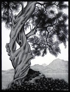 Old Olive Tree, Corsica, 1934  wood engraving by M.C. Escher