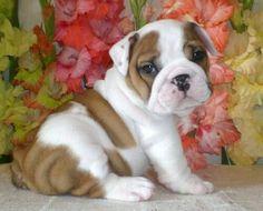 Lo vogliooo