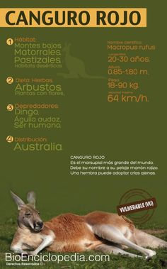 110 Ideas De Mamíferos Animales Mamíferos Jirafa De Peluche
