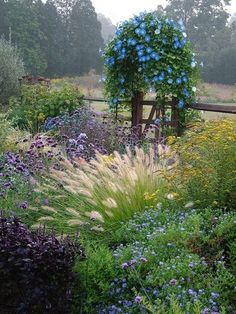 Morning glories are the focal point, but the mix of grasses and perennials are delightful. Lovely garden setting.