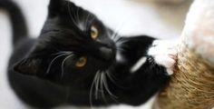 Quitar olor PIS de GATO con Remedios CASEROS. Elimina orina de gato Fácil