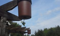 Leftover Buckets Become Incredible Hanging Tomato Planters Gardening without room in your backyard i Tomato Planter, Bizarre, Organic Gardening Tips, Growing Tomatoes, Garden Seeds, Hanging Plants, Garden Planters, Vegetable Garden, Bucket
