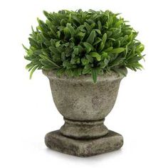 Small Green Rosemary in Urn